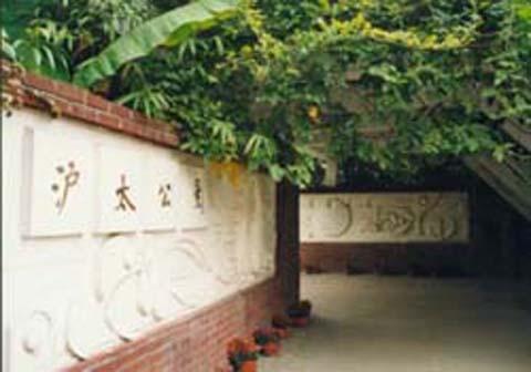 灌木手绘立面图